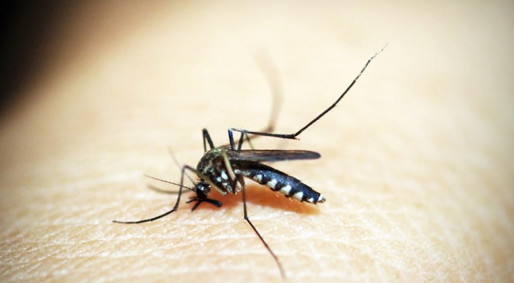 新北今年首例日本腦炎,衛生局呼籲民眾接種疫苗及加強防蚊措施