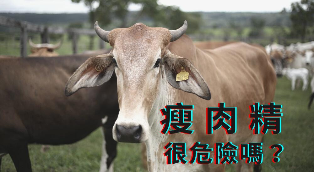 台灣開放美國豬牛肉進口,瘦肉精真的很危險嗎?