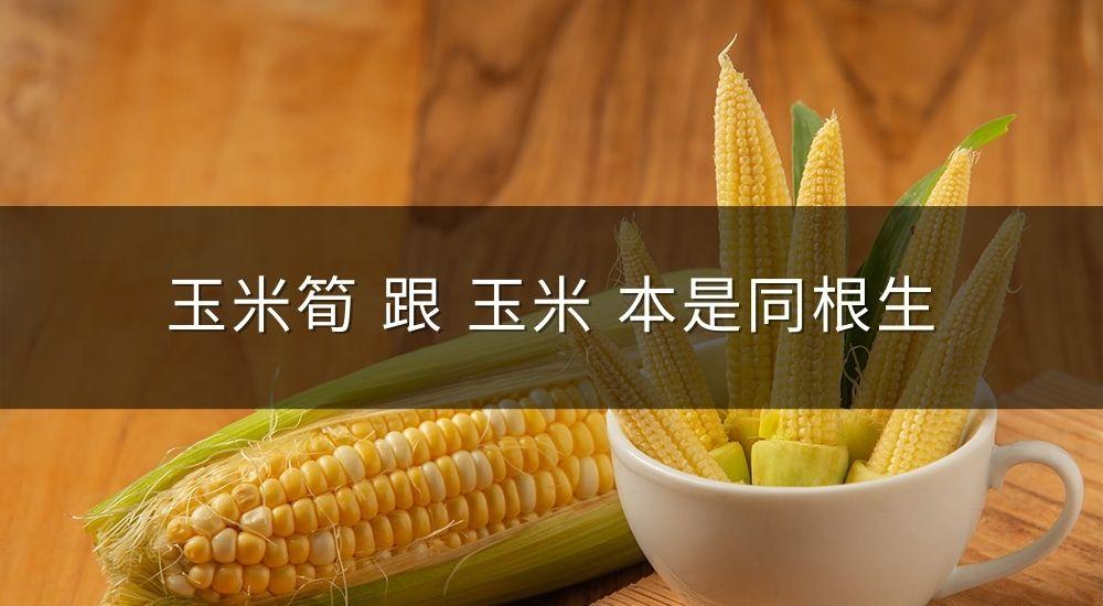 原來「玉米筍」跟「玉米」本是同根生?